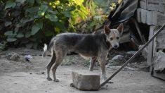 En Colombie, les chiens errants deviennent des chiens policiers