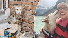Un chien effrayé sauvé d'un abattoir en Chine trouve un nouveau foyer chez une Canadienne aux États-Unis