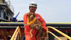 Thaïlande : nouvelle vie pour le chien Boonrod, secouru à 220 km des côtes