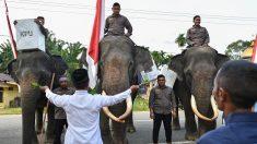 Les Indonésiens votent pour élire le président de la plus grande nation musulmane