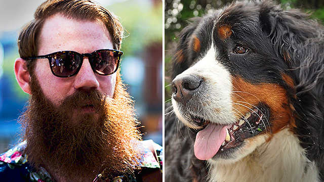 Les hommes qui ont une barbe abritent «significativement» plus de bactéries que les chiens, d'après une étude
