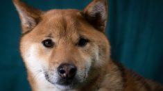Une vidéo montre un étudiant versant de l'eau bouillante sur un chien en cage, puis le battant en l'insultant