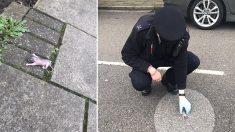 Des agents policiers trouvent un minuscule animal dans une rue de Londres et le réunissent avec sa maman
