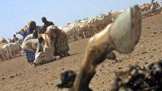 Kenya: pour trouver la pluie, des éleveurs se fient plus à leur portable qu'au ciel
