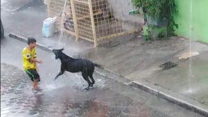 Vidéo: la réaction d'un chien sous la pluie battante est en réalité une leçon de vie
