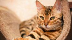 Un chat meurt après avoir été aspergé de peinture jaune en Suisse