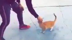 La police nationale cherche à identifier un homme filmé en train de frapper violemment un chat