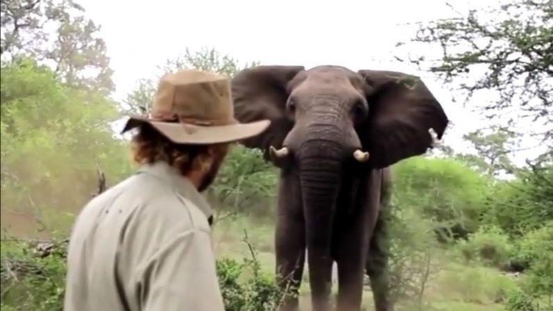 Un homme a une rencontre incroyable avec un éléphant mâle sauvage