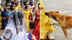 Un chien mord une étrange jeune fille pendant un mariage - quelques instants plus tard, des villageois sont secoués par une énorme explosion