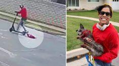 Une vidéo montre une femme en train de traîner un chien en sang derrière sa trottinette électrique
