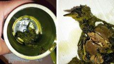 Elle découvre un oiseau mort dans sa boîte d'épinards de la marque Del Monte après l'avoir goûtée
