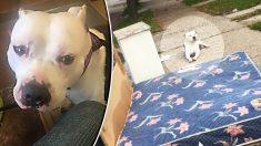 Un chien attend tranquillement sur un matelas délaissé après que ses propriétaires l'ont abandonné avec les ordures