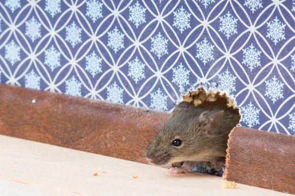 """Résultat de recherche d'images pour """"souris 600x400"""""""