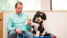 Chiens dressés pour vétérans perturbés, une thérapie par l'animal