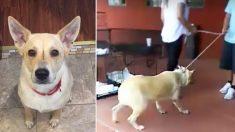 Une chienne effrayée est traînée dans un refuge par sa famille. Un jour plus tard, sa vie se transforme