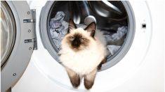 Un chat survit à un cycle de lavage, rinçage et essorage dans une machine à laver familiale