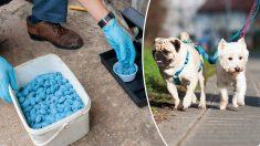 La vigilance est toujours de mise : la police alerte les propriétaires de chiens après avoir trouvé dans un parc canin des pains contenant de la mort-aux-rats