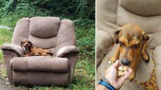 Un chiot abandonné a été trouvé sur un fauteuil au bord de la route