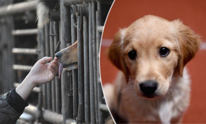Ils aident à sauver des chiens destinés à être consommés en Chine