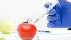 Voici 8 raisons d'éviter les OGM