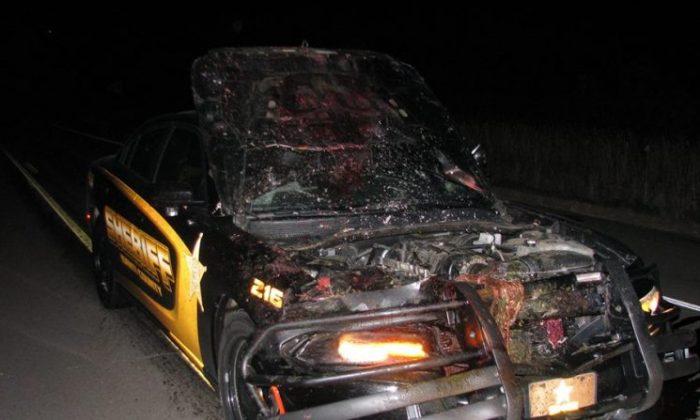 Une caméra sur le tableau de bord d'une voiture montre un officier entrant en collision avec un cerf à 180 km/h
