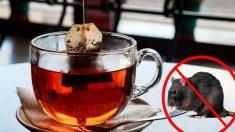 Gardez les araignées et les souris hors de votre foyer, tout ce dont vous avez besoin est d'un sachet de thé