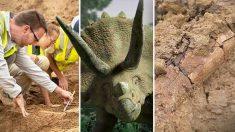 Des scientifiques découvrent un énorme squelette de tricératops adulte datant de 68 millions d'années