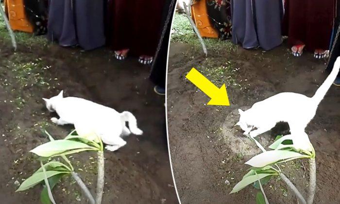 Un chat fait son apparition pendant les funérailles d'un homme et agit bizarrement, c'est alors que le petit-fils commence à filmer