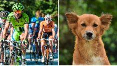 Des cyclistes s'arrêtent pour réparer un pneu et deviennent le miracle d'un chien abandonné et sous-alimenté