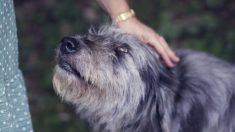 Équateur : un don de croquettes empoisonnées est arrivé dans plusieurs refuges - plus de 20 chiens décédés