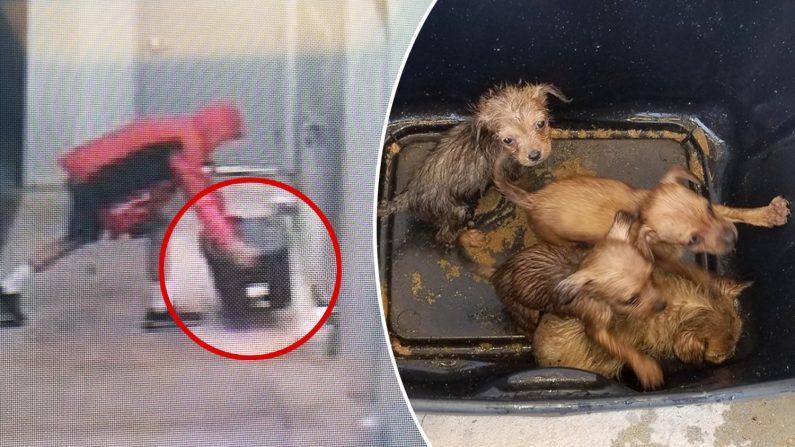 Un homme a été filmé en train d'abandonner des chiots dans une boîte fermée, la police cherche à l'identifier