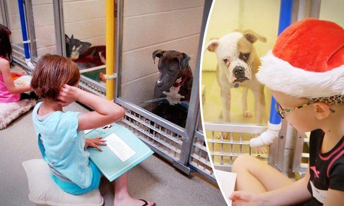 Des enfants encouragent des chiens effrayés d'un refuge à sortir de leurs coquilles en leur faisant la lecture pour les aider à se faire adopter