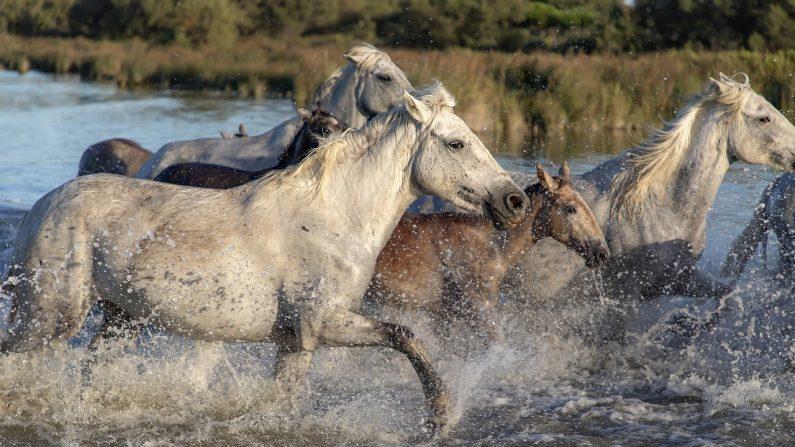 6 femmes risquent leur vie pour sauver 100 chevaux de la noyade lors d'une inondation