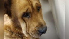 Un chien refusait de regarder qui que ce soit après la mort de son propriétaire. Tout a changé quand il a rencontré cet homme