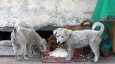 Un jeune Brésilien en a assez de voir des chiens affamés - il ouvre un restaurant spécialement pour eux